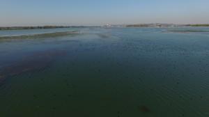 Več kot 21.000 ptic na Ptujskem jezeru.